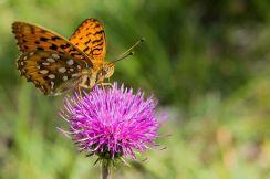 butterfly-2492649__480